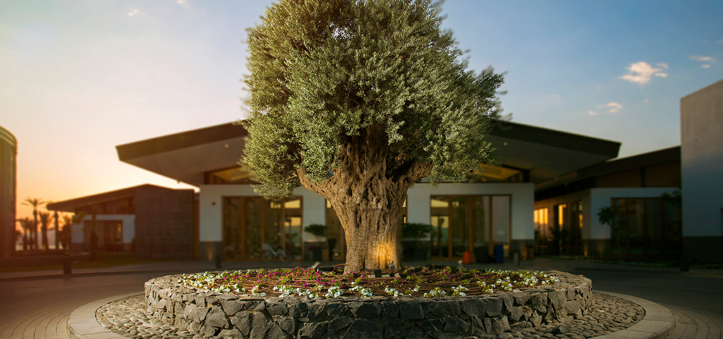 The Setai Sea Of Galilee a Luxury Hotel